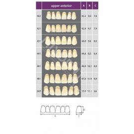 Zęby Classic przednie górne