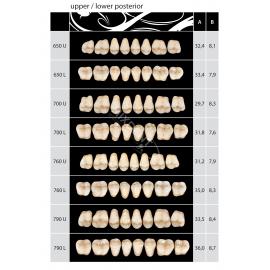 Zęby Almamiss kolor Vita boczne dolne