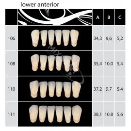 Zęby Almamiss kolor Vita przednie dolne