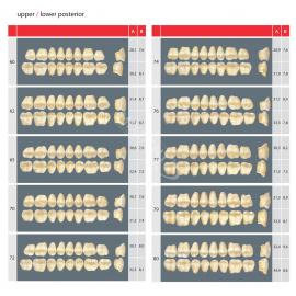 Zęby Estetic kolor Vita boczne dolne