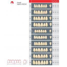 Zęby Estetic kolor Wiedent przednie górne