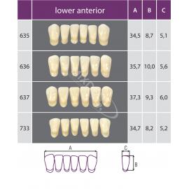 Zęby Classic kolor Vita przednie dolne